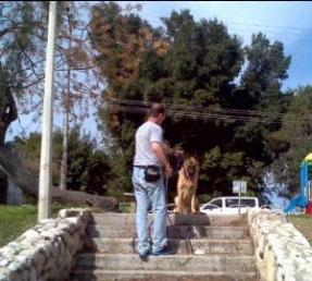 מאלף כלבים גדולים